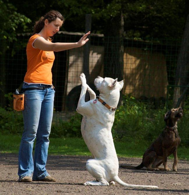Mirror Method Dog Training