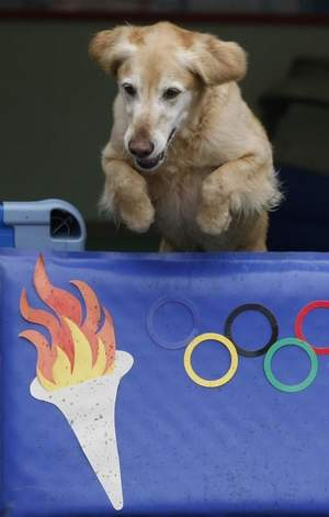 Going for Gold at the Doggy Olympics