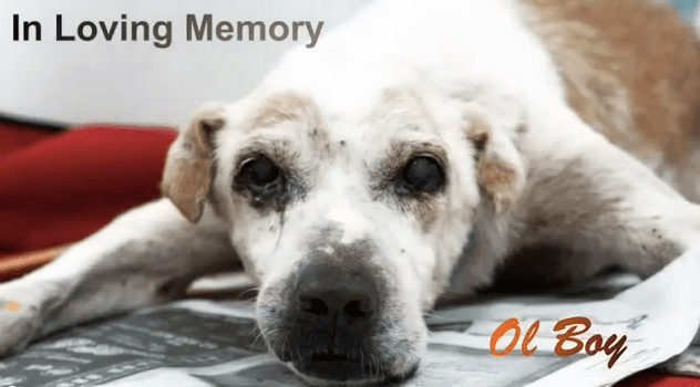 Lonely Old Dog Has His Final Wish Fulfilled