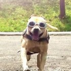 Super Dog!