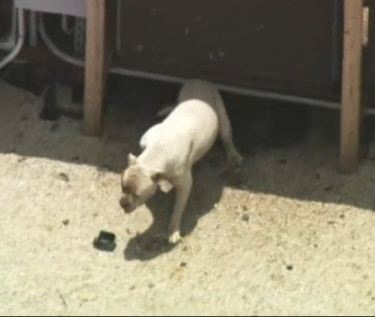 After a Year of Complaints Miami Businessman Agrees To Take Dog Off Of Roof