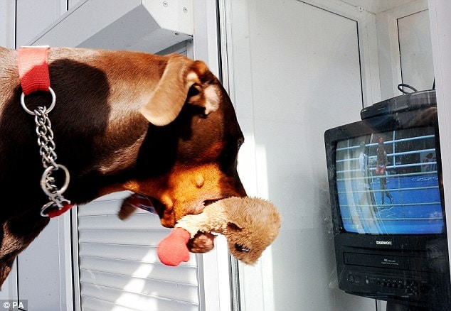 Doberman Barked in Support As He Watched Owner Win Olympic Gold Medal