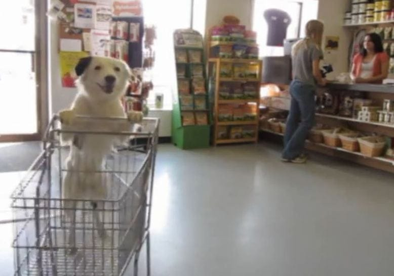 Talented Puppy Hero Goes Shopping!