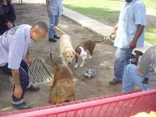 TAILS Celebrating a Successful Program As Inmates Socialize Dogs for Adoption