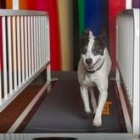 Dog Treadmills are a Growing Trend Amongst Pet Owners