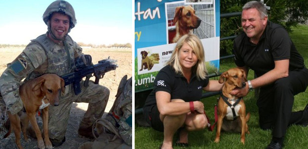 Soldier's Dog Helps Raise Funds for Shelter in Afghanistan