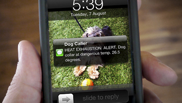 New Dog Collar Sends Text to Alert Owners of an Overheating Pet
