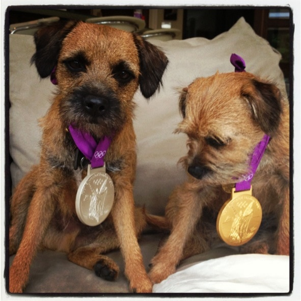 Andy Murray's dogs wear his Olympic medals