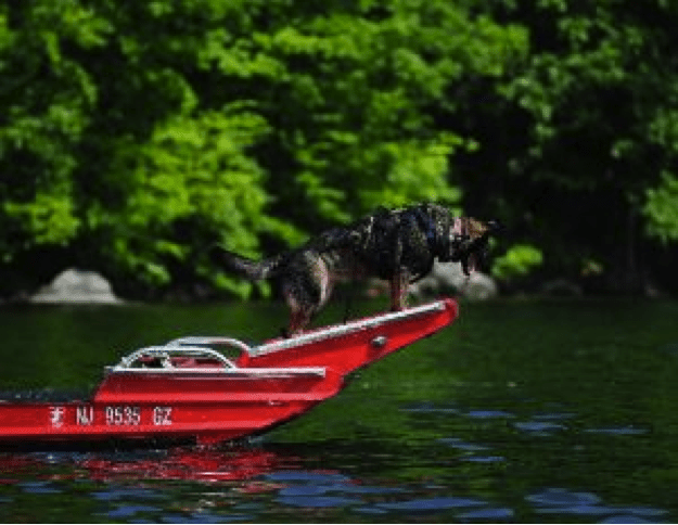 Moosie gets a Water Workout with New Jersey Search-and-Rescue Dogs