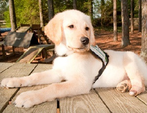 Pirelli – A Very Special, Special-Needs Puppy