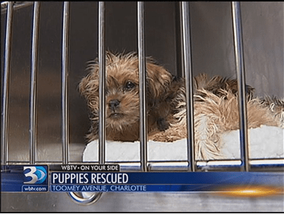 Anonymous Tip Brings Puppy Mill Closure and Arrests