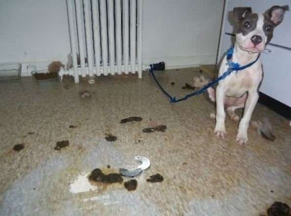 Peta Rescue Abandoned Puppy Left In Own Filth