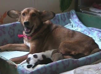 Animal Friends Organization Looking for Donations to Help Sick Dog and Her Pups