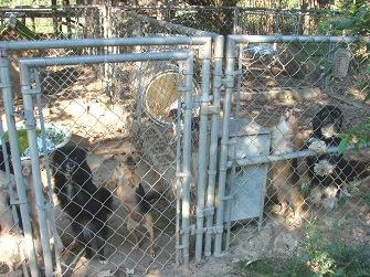 Puppy Mill Busted in South Carolina