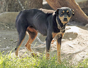 York Counties Push for Stricter Anti-Tethering Laws
