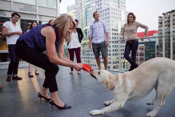 Dog-Sharing Becoming a Popular New Trend for Busy Owners