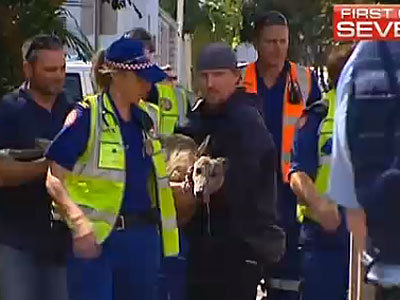 Dramatic Fire Rescue of Greyhound by Factory Workers and Medics