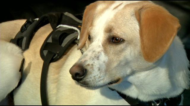 Service Dog Awarded After Saving Her Owner's Life