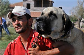 Anatolian Dogs Used to Guard Museums in Turkey