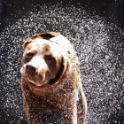 Science Explains Wet Dog Shake