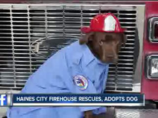 Firehouse in Florida Rescues and Adopts a Dog