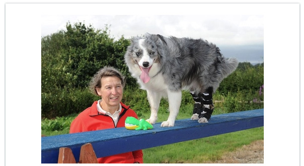 Border Collie Gets a Second Chance at Walking