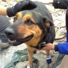 Rescuers of Missy, the Dog Stranded on a Colorado Mountain, Make an Appearance on the Ellen Show