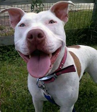 Breed Specific Legislation Fight Continues In Maryland