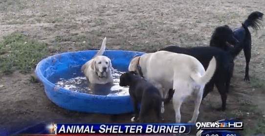 A Community Gives Back To Their Beloved Animal Rescuers