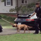 Police Raid Suspected Dog Fighting Ring in Virginia
