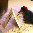 Blind Rescued Dachsund Paints to Save Others