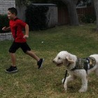 Chase, an Autism Service Dog, is Giving One Family Peace of Mind