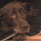 Judge Upholds Verdict Awarding over $600,000 to family whose dog was shot by a police officer