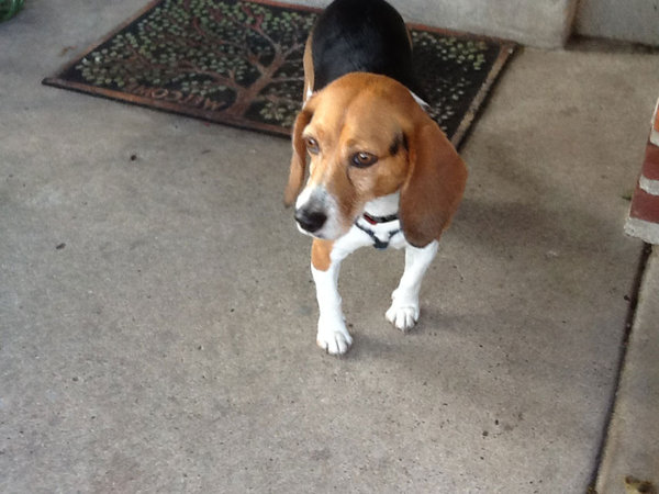 Beagle jumps off bridge falling almost 75 feet and swims away with just a bruise