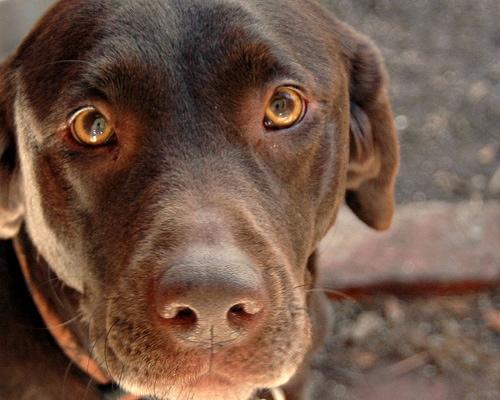 Fortunate Dog Survives Dangerous Highway Encounter