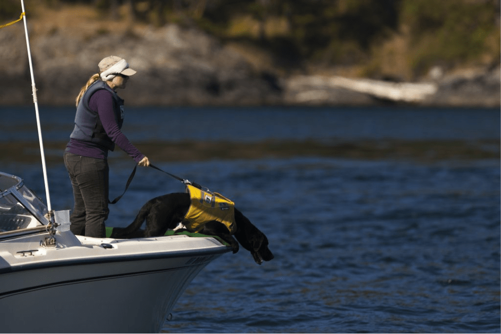 A Dog with a Unique Skill is Helping Marine Biologists Track the Health of Orca Whales