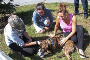 Pit Bull stolen from animal shelter is returned after 2 day search