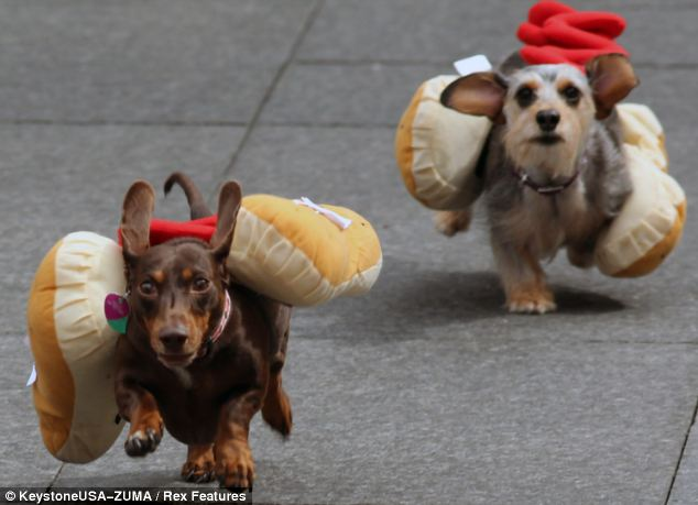 "Cincinnati kicks off Oktoberfest with the ""Running of the Weiners"""
