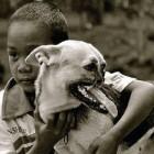 UPDATE: Hero Dog Kabang Begins Trip to US for Facial Reconstruction
