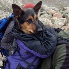 UPDATE: Owner of Missy, dog left stranded on a Colorado mountain, has agreed to give her to one of her rescuers.