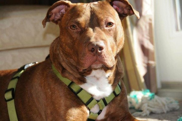 """""""Patrick's Law"""" is Hoping to Raise the Penalties for Animal Abuse in New Jersey"""