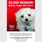 Reward of up to $5,000 being offered for reporting puppy mills