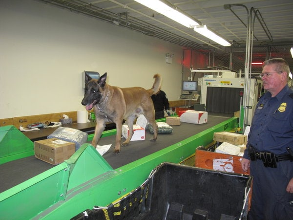 """Rogue is Being Called a """"Wonder Dog"""" for His Work with U.S. Customs and Border Protection"""
