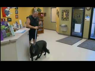 Stem Cell Transplants Allow 2 Lucky Dogs to Feel Young Again