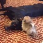 Quincy & Sadie