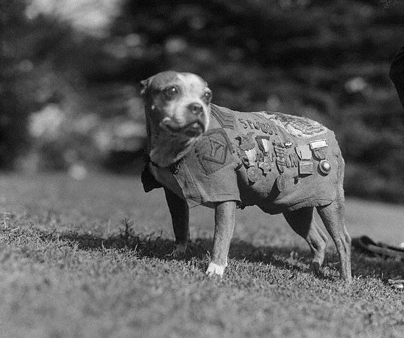 Sergeant Stubby: World War I's Hero Dog