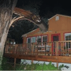 Dog Alerts Owner to Danger Before Tree Falls on Their House