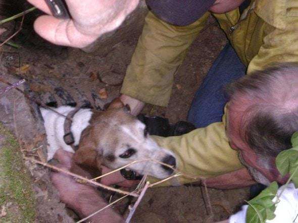 """Результат пошуку зображень за запитом """"рятувальники витягнули собаку"""""""