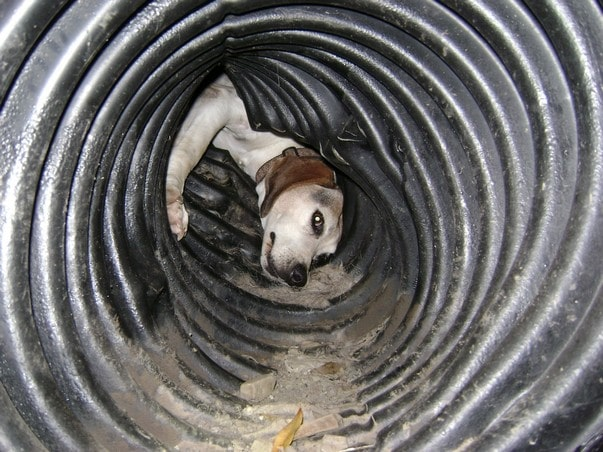 Firefighters free dog trapped in a pipe
