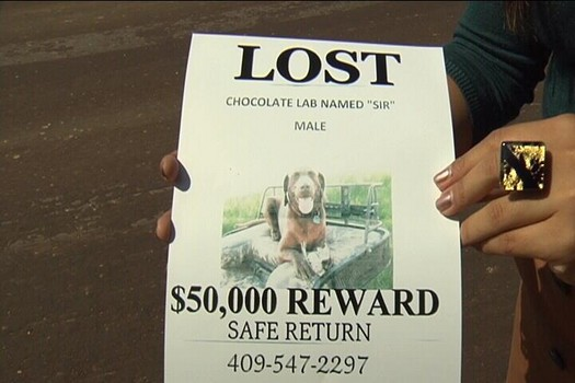 Texas Man Offers $50,000 for His Missing Dog